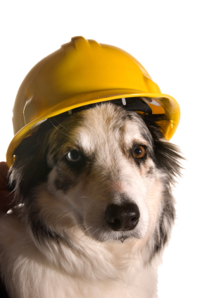 dog in hard hat